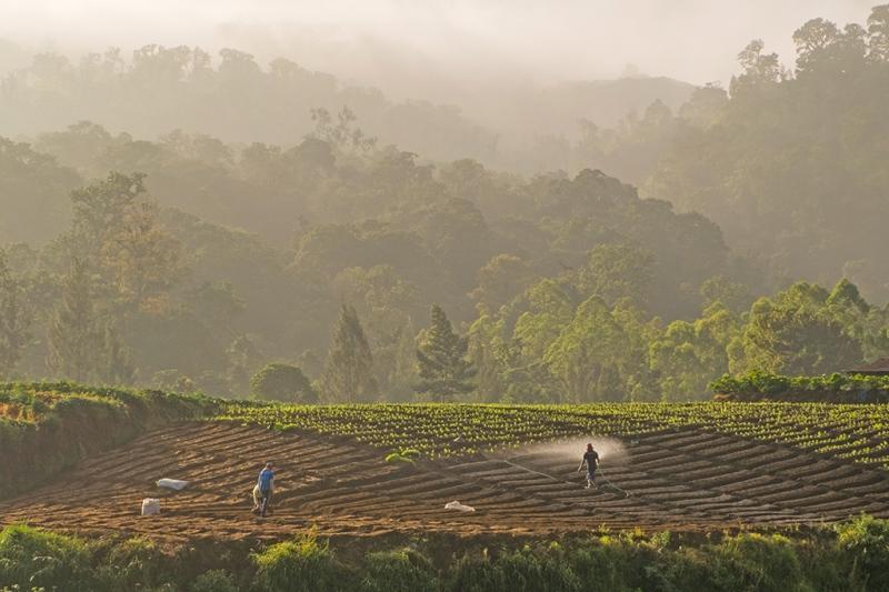 Pagi di Cangar - Suasana lahan pertanian di sentara pertanian Dusun Cangar, Sumber Brantas - Batu - Jawa Timur. Ketersedian air menjadi hal yang sangat penting untuk hasil panen yang baik. Foto diambil pada 30 Mei 2015. (c) Muhammad IQbal / m1qbalimages